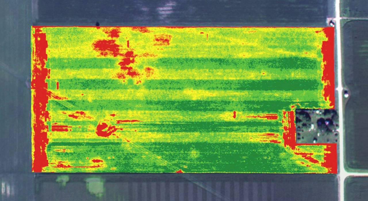 termografia-agricola